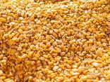 Кукуруза 5000 тон. . - фото 4