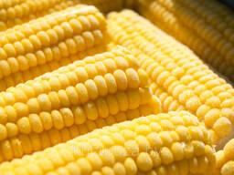 Замороженная кукуруза в початке