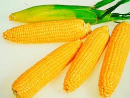 Кукуруза сахарная пищевая (сорт Драйвер, Франция)