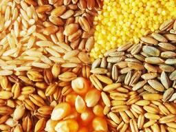 Кукурузу, Ячмень, Рожь, Пшеницу, Тритикале, Гречиху урожай 2020