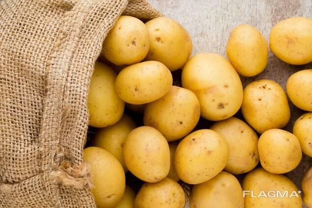 Купим картофель продовольственный 5