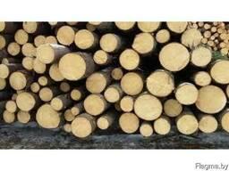Купим круглый лес (ель, сосна) 14-24 см на постоянной основе