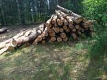 Куплю дрова березовые - фото 1