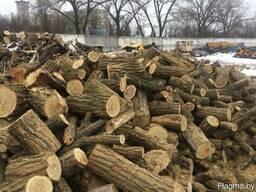 Куплю дрова дуб, граб, клен, береза долгатьем, метровками