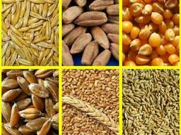 Куплю фуражное зерно от 20 тонн.