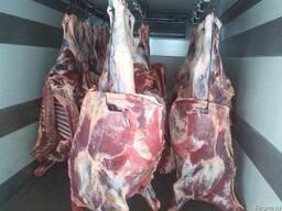 Куплю говядину КРС