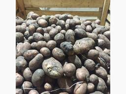 Куплю картофель нестандарт