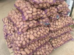 Куплю картофель оптом семенной и продовольственный