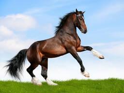 Куплю крс, лошадей