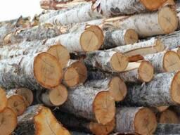 Куплю кругляк на дрова разных пород