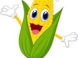 Куплю Кукурузу в любом виде самовывоз