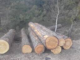 Куплю лес кругляк