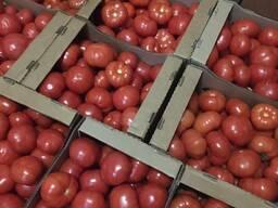 Куплю томат оптом