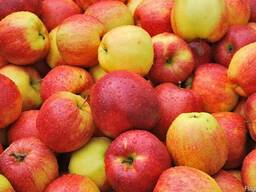 Куплю яблоки на промпереработку