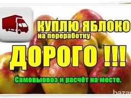 Яблоки на промпереработку, опад , некондиция .
