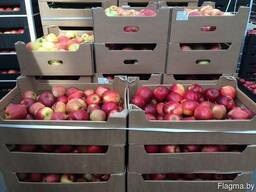 Куплю яблоко сезонное оптом