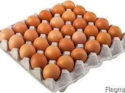 Куплю яйцо с дисконтом