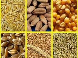 Куплю зерно фуражное