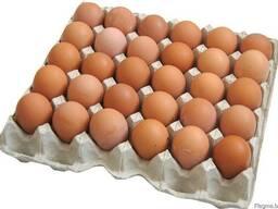 Куриное яйцо (белое)