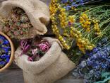 Лекарственные травы - фото 1