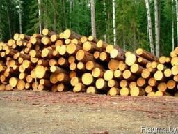 Лес круглый