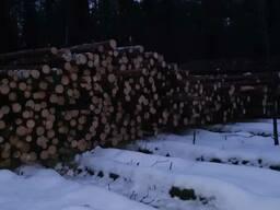Лес круглый сосна