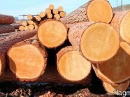 Лес кругляк хвойных пород(сосна)от 24 и более см.