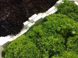 Листовые салаты и аромат. травы из Испании. Прямые поставки.
