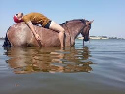 Лошади для вас! Прогулки на лошадях! Прокат лошадей.