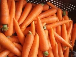 Куплю лом моркови