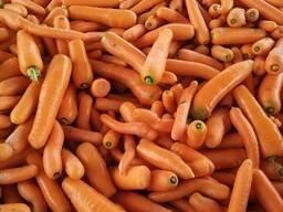 Морковь второго сорта