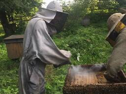Мёд Урожай 2020 Можно Опт