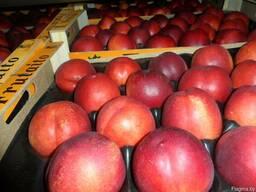Нектарины и персики из Испании. Прямые поставки