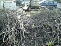 Обрезка деревьев(омолаживающая, формовочная, санитарная) - фото 4