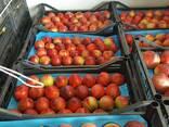 Оптовая продажа фруктов и овощей из Турции от производителя - фото 3