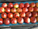 Оптовая продажа фруктов и овощей из Турции от производителя - фото 7
