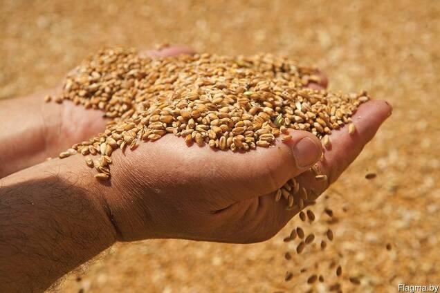 Организация продаёт зерно фуражное