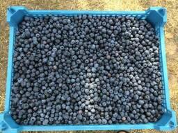 Организация заключает договора на покупку ягод(малина