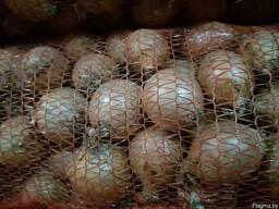 Овощи - фото 3