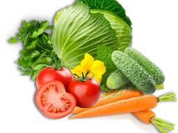 Закупаем овощи оптом на постоянной основе