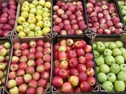 Овощи-яблоки