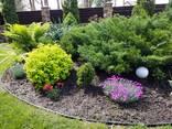 Озеленение и благоустройство участка - фото 4