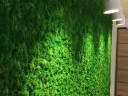 Озеленение помещений стабилизированным мхом