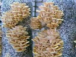 Пакеты для выращивания грибов