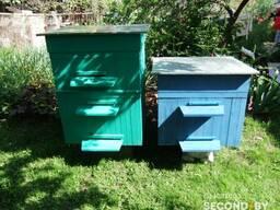 Пчелиный улей.