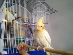 Передержка канареек, попугаев, птиц любых пород и размеров