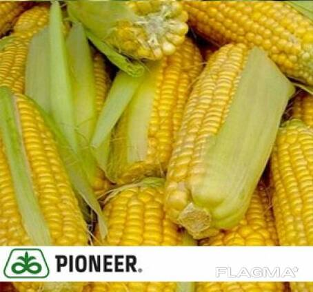 Pioneer ПР39Х32 (PR39H32) семена кукурузы ( гибрид)