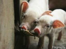 Поилки для свиней (все размеры)