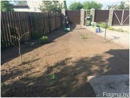 Посев газона в гомеле