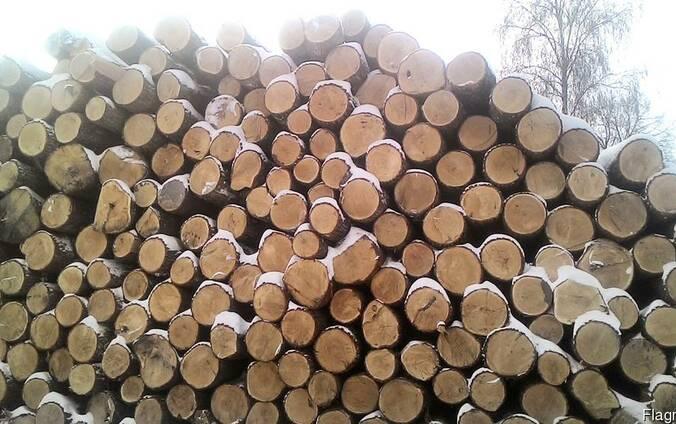 На постонной основе заккупаем круглый лес :ольха, дуб, ясень